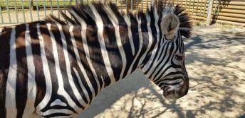 Zoo and leading wildlife park