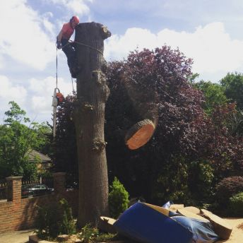 Tree surgeons fully qualified and professional